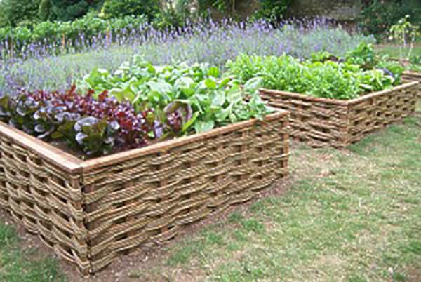 Raised Vegetable Beds In A Garden Near Bath Winterbourne